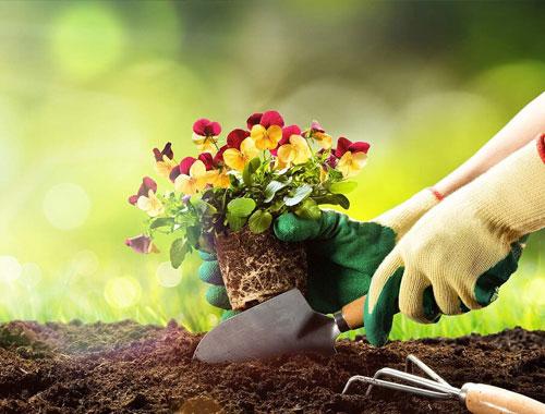 خدمات باغبانی سیار